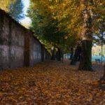 Walking tours Vicenza